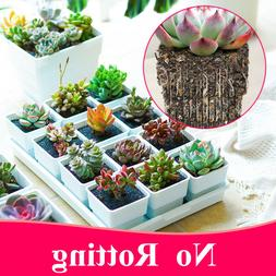 Meshpot 2 3 4 Inch Square Plastic Succulents Pot With Tray C