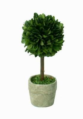 real preserved boxwood mini single topiary in
