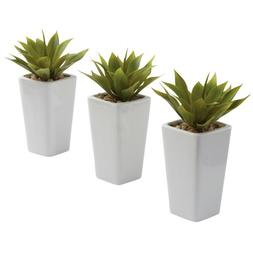 3-Pc Mini Agave with Planter Set