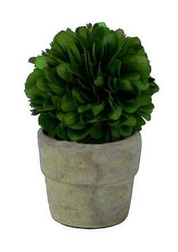 """Real Preserved Boxwood Mini Single Ball Topiary in Pot 4"""""""